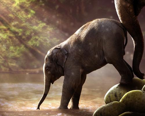 Las curiosidades del elefante: nueva sección en Onda Cero