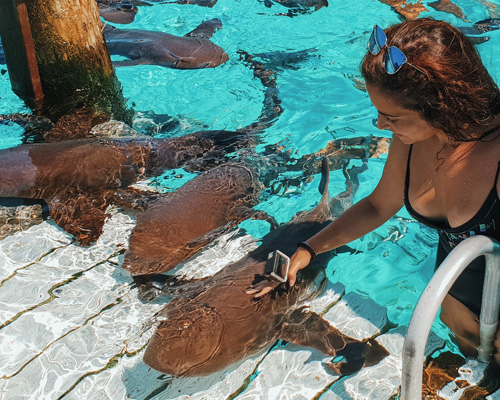 Nadamos con tiburones y esto es lo que ocurrió