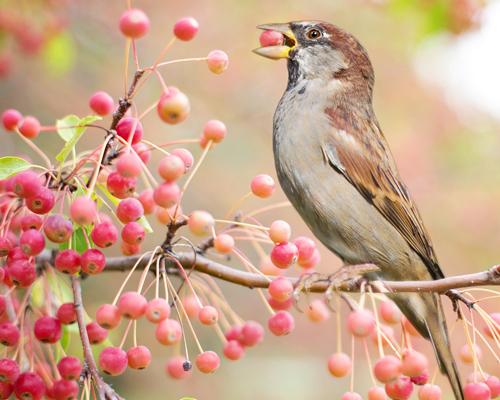 Pájaros alcoholizados irrumpen en Minnesota