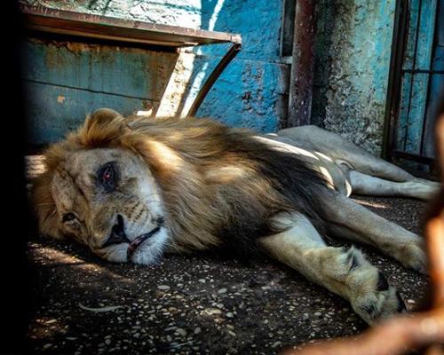 Rescatan a 12 animales moribundos de un zoo