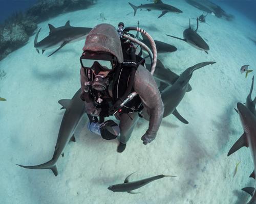 Bailando con tiburones: Entrevista a Cristina Zenato