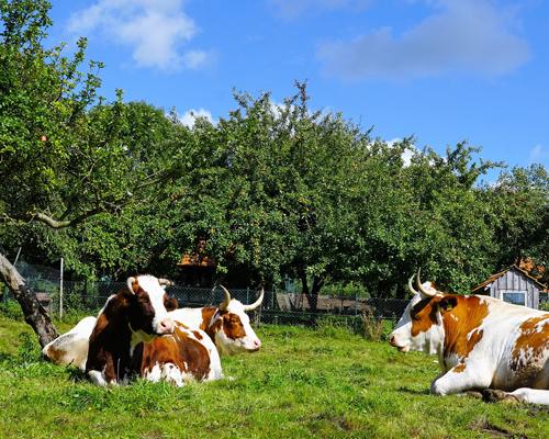 Escocia obligará a instalar cámaras en los mataderos