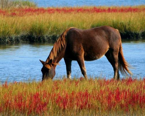 La ola de calor australiana mata a 40 caballos