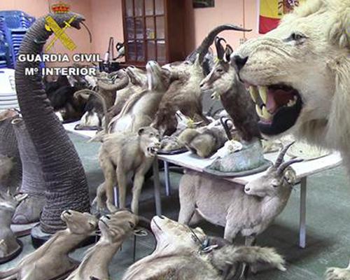 Culmina la mayor operación contra el contrabando de animales en extinción