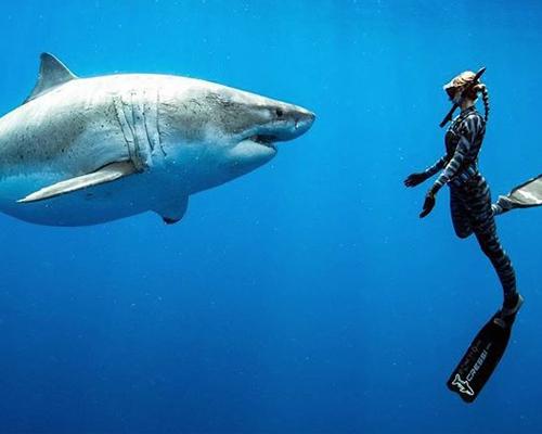 El gran tiburón blanco y su secreto contra el cáncer