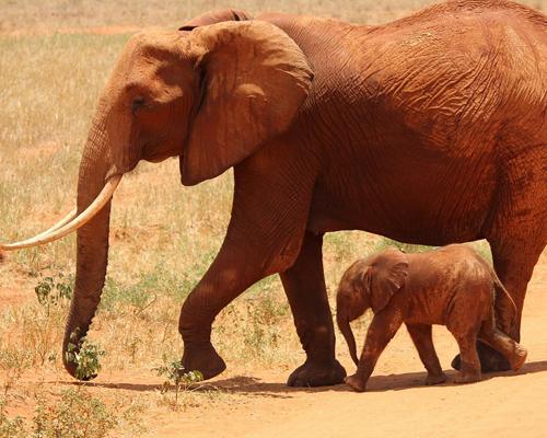 Investigan la muerte de 150 elefantes en Botsuana