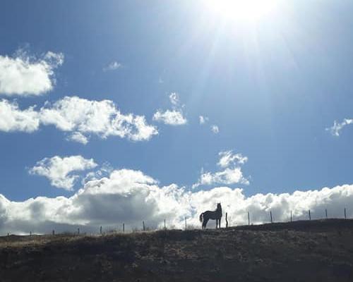 El emotivo rescate de un caballo atrapado