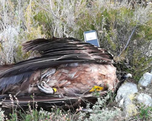 Hallan 70 animales muertos por cebos envenenados