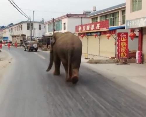 Un elefante salvaje siembra el pánico en China