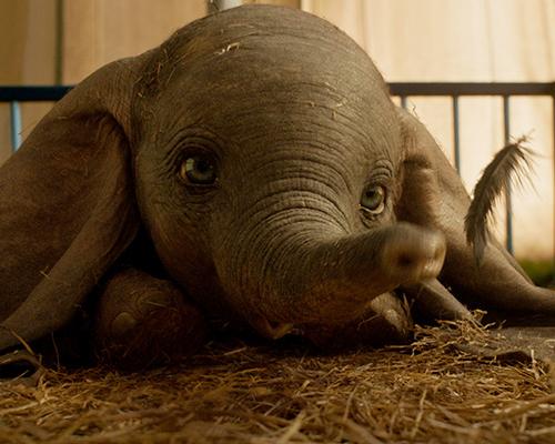Vuela alto, Dumbo
